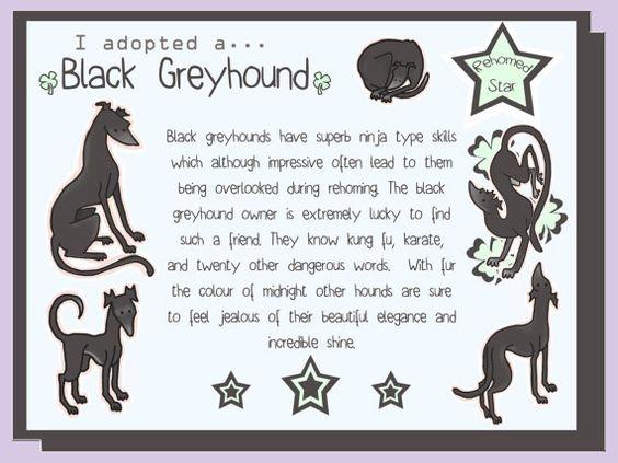 Black Greyhounds